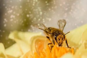 Bee and pollens
